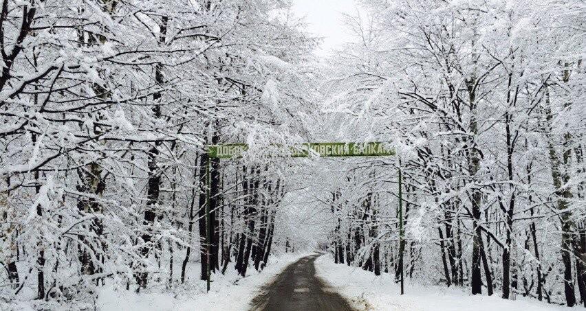 """Ураганен вятър затвори пътя до ски зона """"Ком"""""""