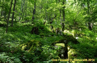 (Bulgarian) Залесяване и много игри за Седмицата на гората във Враца