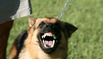 Köpeğiniz Hırlıyorsa Yapmanız Gerekenler Hırlamak köpeğinizin sağlıklı iletişim kurma yeteneğini göstermektedir.Yapılması gereken hırlamayı yasaklamak değil, hırlamaya neden olan olayda köpeğin tehdit algısını değiştirmektir. http://sevgilikopegim.com/2014/11/17/kopeginiz-hirliyorsa-yapmaniz-gerekenler/