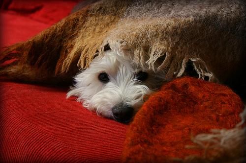 Köpeğimin Fobisi Var!Nasıl kimi insanların köpek, böcek fobisi varsa, köpeklerinde farklı korkuları, fobileri var. Köpeğin gerçek veya tehdit olarak algıladığı bir şeye tepki göstermesi, yani korkması normal bir davranış. Ancak korku hali aşırı ve sürekliyse, bu köpeğinizin korku halinin fobiye dönüştüğünün işareti olabilir. http://sevgilikopegim.com/2014/10/05/kopegimin-fobisi-var/