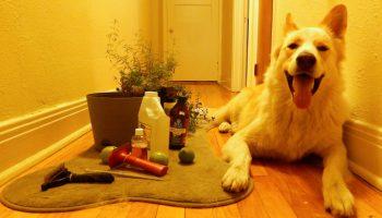 Doğal Yöntemlerle Pire ve Kenelerle Savaş 4 adımda doğal yöntemlerle, ev yapımı doğal ürünlerle köpeğinizin pire-kene sorununa veda edin. Kolay tariflerle hem köpeğinizin sağlığını koruyun, hem de tasarruf edin. http://sevgilikopegim.com/2014/10/06/326/