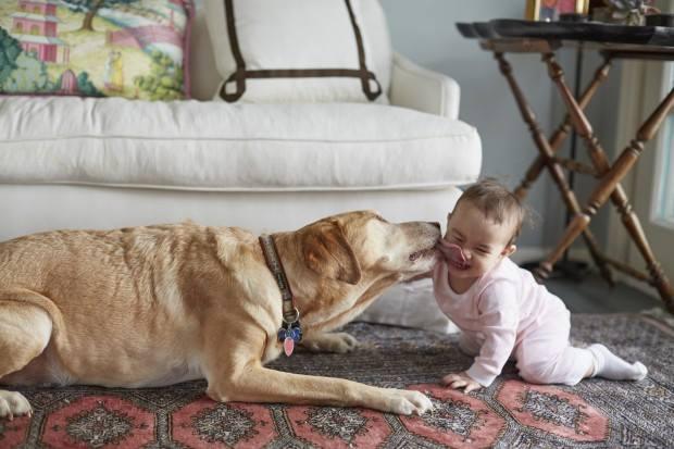 20 Bin Köpek Oscar Ödül Gecesinde İnsanını Arıyor http://sevgilikopegim.com/2015/02/21/20-bin-kopek-oscar-odul-gecesinde-insanini-ariyor/