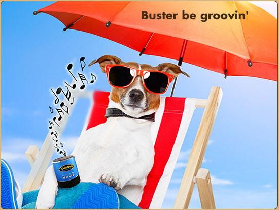 Kedi ve Köpekler İçin Müzik Terapi http://sevgilikopegim.com/2015/02/01/kedi-ve-kopekler-icin-muzik-terapi/