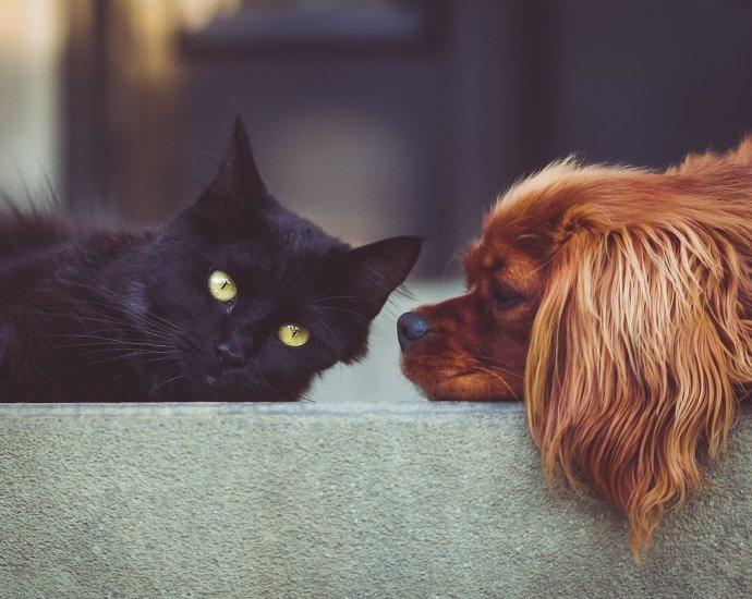 Kedi ve Köpeklerde Kısırlaştırma