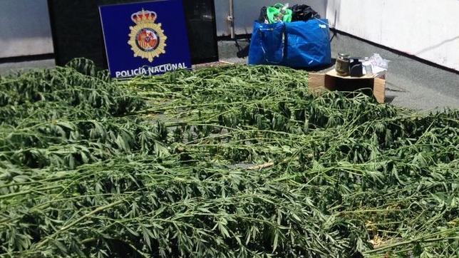 Cultivaba marihuana en una casa ilegal de El Puerto de Santa María