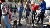 Imagen de archivo de la marcha canina de 2015 / L.M.