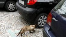 Un gato entre varios coches