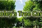 Roley's Tree Care Service in Norco