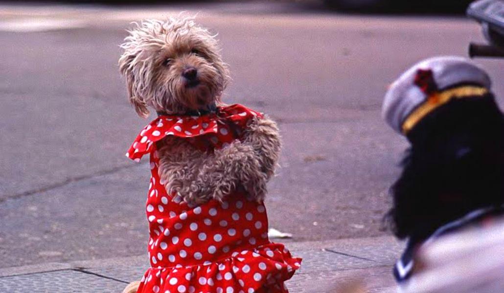 feria canina de abril