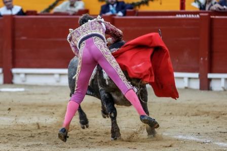 Escribano_cornada_Alicante2016