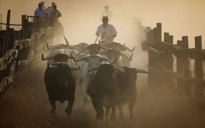Los toros de Miura ya están en Pamplona