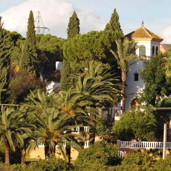 Ave Maria Farm in the origin of Bitter Orange