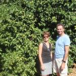 Walking in a citrus paradise, Ave Maria Farm