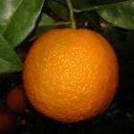 Seville Traditional Bitter Orange Marmalade