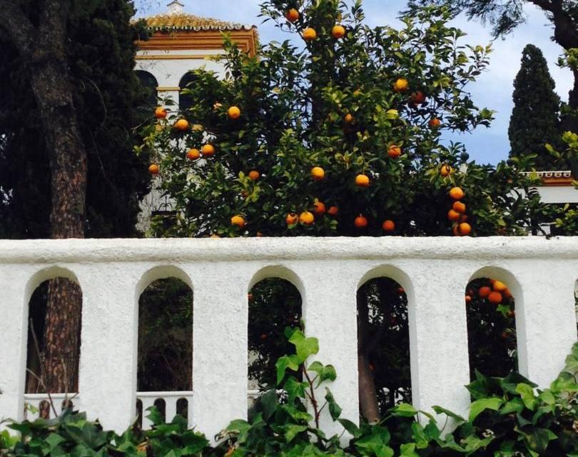 A Visit to Ave Maria Organic Farm