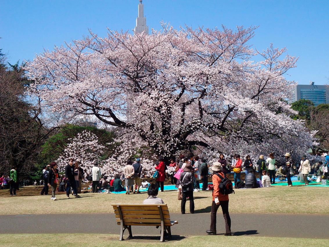 Shinjuku, Harajuku, Shibuya e Akihabara - 3º diário de viagem