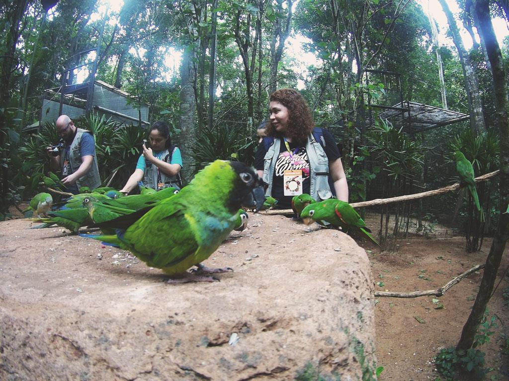 papagaio-dando-um-oi
