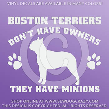 Funny Boston Terrier Car Decals