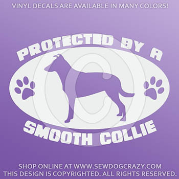 Protected by a Smooth Collie Vinyl Window Stickers