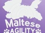 Maltese Agility Decals