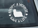 Adopt a Yorkie Decal