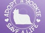 Adopt a Yorkie Decals