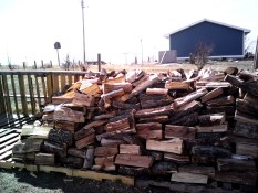 woodchuck2IMG_20140330_140042