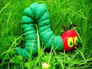 caterpillarsoftie