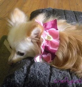 Tutorial Ruff Ruffle Dog Collar Embellishment Sewing