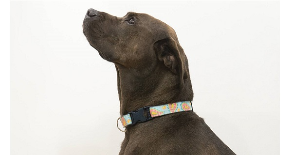 Tutorial: DIY custom dog collar