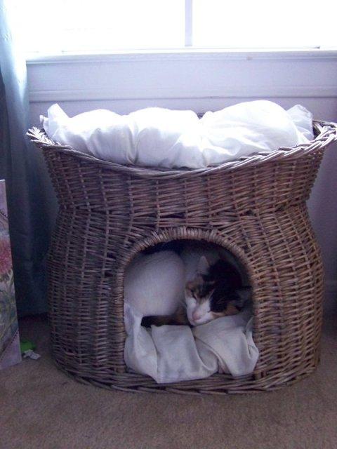 Ellie so sleepy in her bed