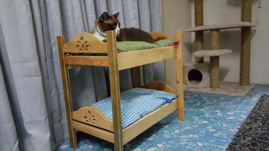 diy-pallet-cat-bunk-bed