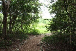 The end of the citrus grove trail at John Pennekamp State Park.