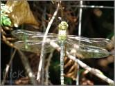 Libelle1_180
