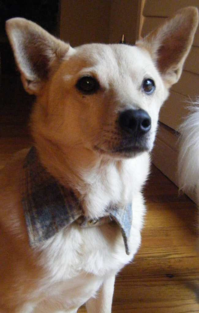 Upcycled Dog Collar by Sew Doggy Style, Pet Pattern Tutorials