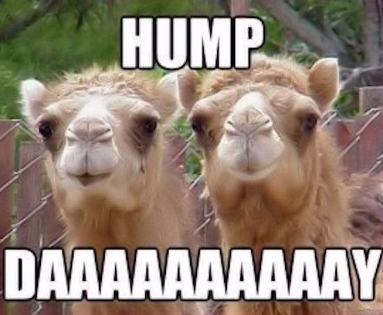 dry hump