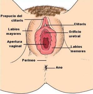 genitales_femeninos