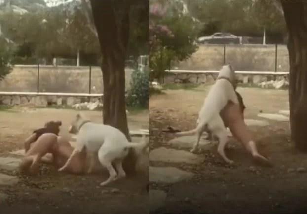Cachorro não precisa mais do link videos porno » SexoMaluco