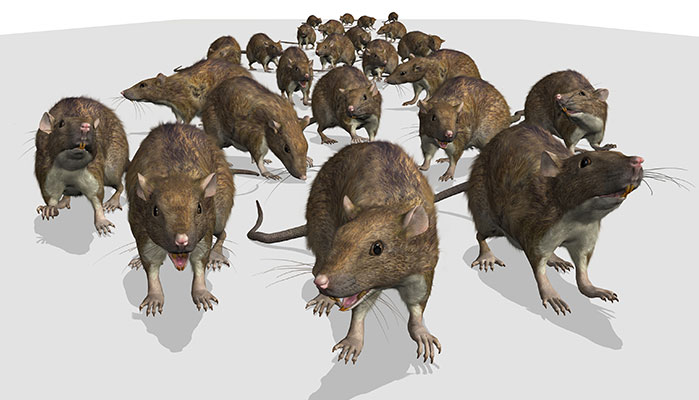 Super Rats to Outnumber Humans in UK