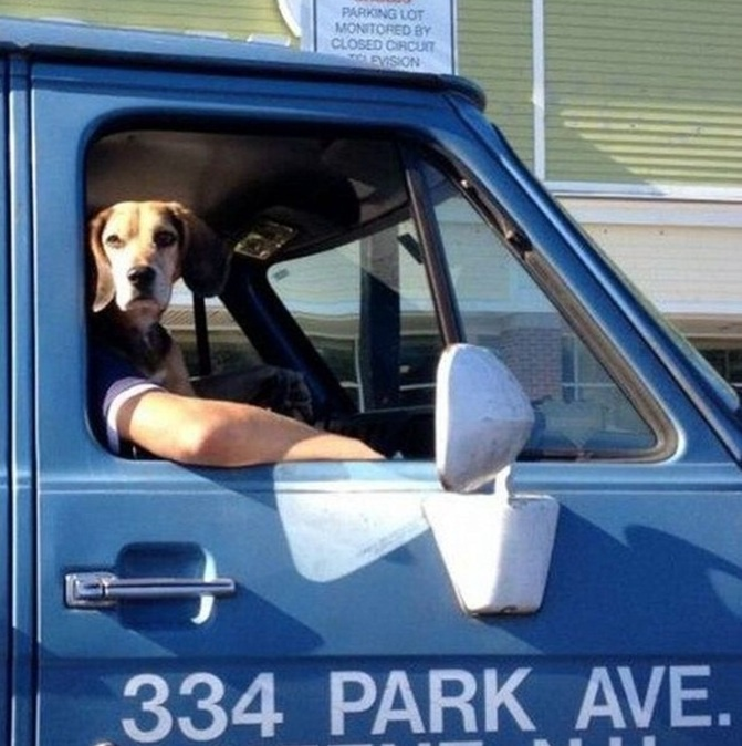 cachorro-engraçado-humor
