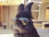 Coelho com óculos