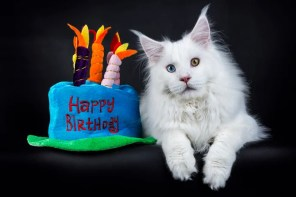 Happy Birthday Facebook