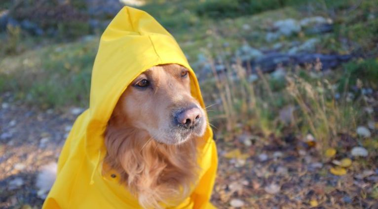 The Story of how raincoats are invented.
