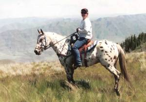foundation_appaloosa_mare_roxies_spotted_rose_darcy
