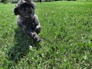 Yes, another pet pic! But I love my pets....this is Kona running in the field. Action testing for Lula!