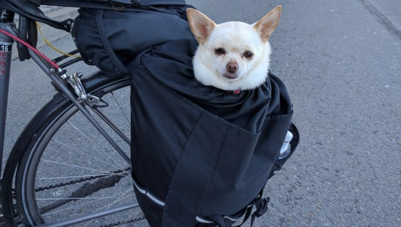 Meet Teyla, Peter Chu's dog, looking ridiculously cute in his pannier. Photo: Streetsblog