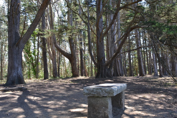 Key to making McLaren Park more vibrant and available is improved way finding so people can find things such as the bench on Philosophers Way. Photo: Rec & Parks.
