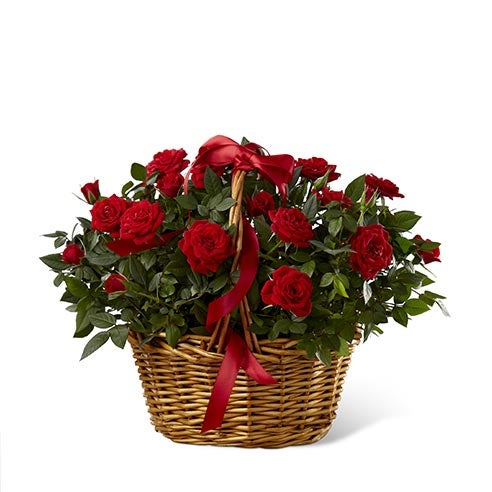 Cheap flowers free delivery in this red rose basket for dad