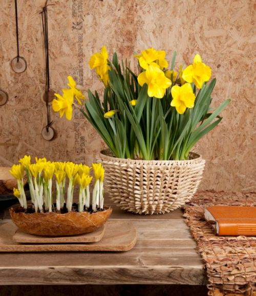 decorarea casei cu flori de primavara