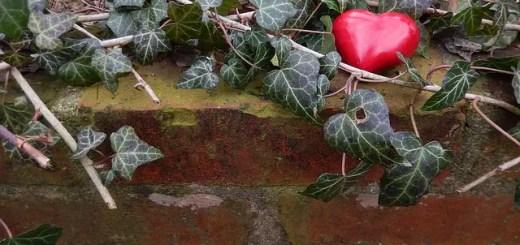 20 de plante medicinale indicate in afectiunile cardiace